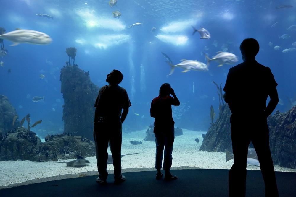 Lisbon oceanarium - Oleg Kozlov/Shutterstock